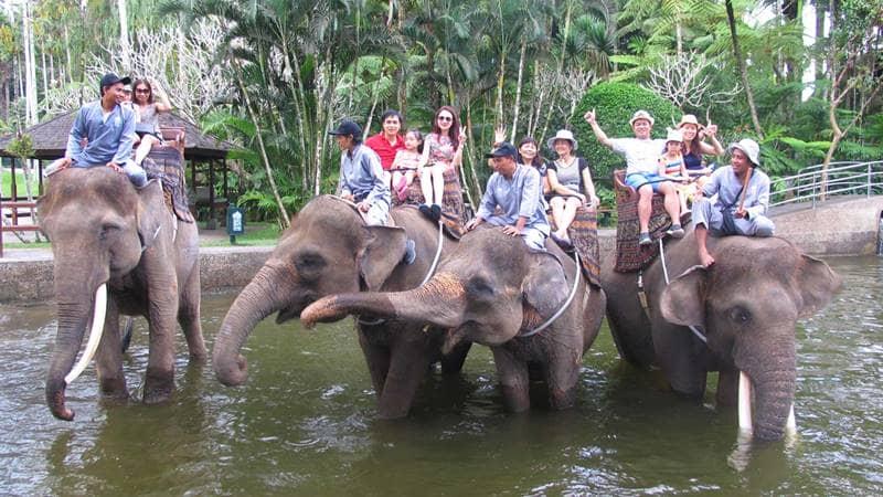 Trải nghiệm cưỡi voi thú vị cho những gia đình có trẻ nhỏ. Nguồn: Internet