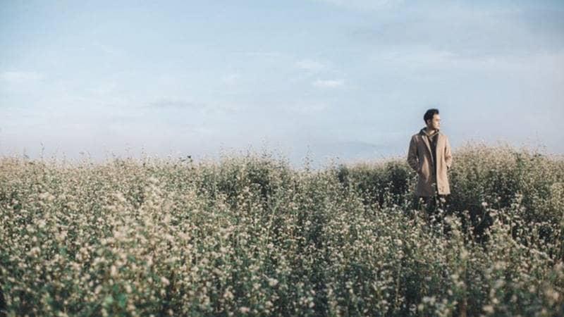 Cánh đồng hoa tam giác mạch ở Đà Lạt Milk Farm là một cảnh quay trong MV của ca sĩ Quang Vinh