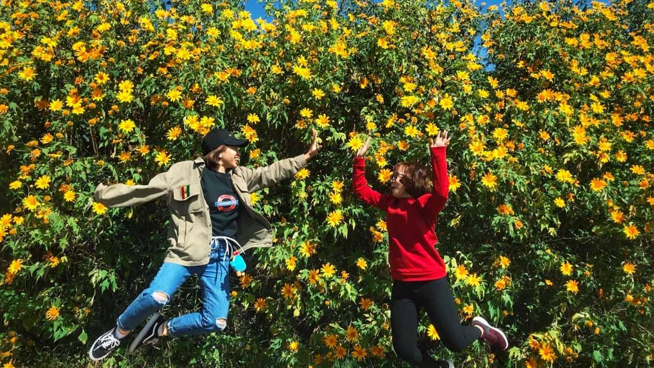 Dã quỳ là loài hoa Đà Lạt được rất nhiều bạn trẻ yêu thích và tìm đến để check-in cứ mỗi dịp cuối năm. Nguồn: Internet
