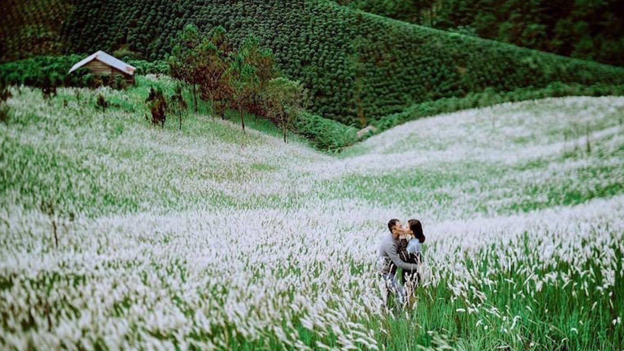 Rất nhiều các cặp đôi tìm đến cánh đồng lau trắng để chụp hình kỷ niệm