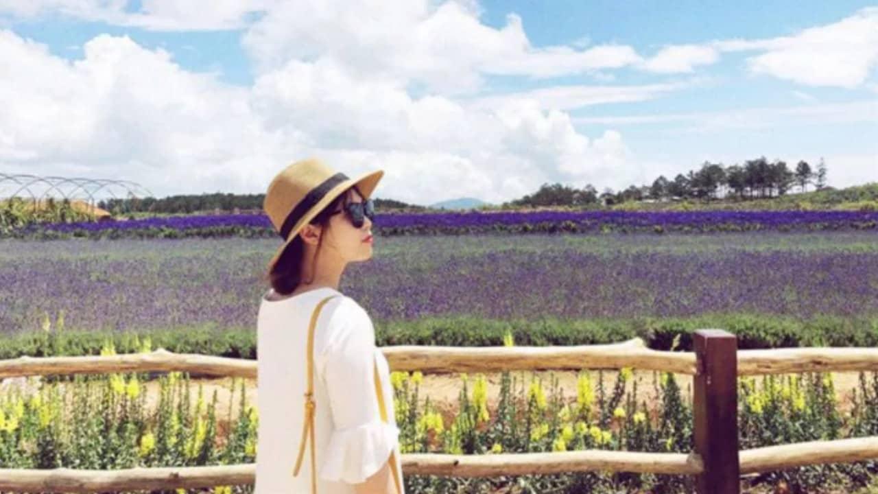 Cánh đồng Lavender trong Cầu Đất Farm
