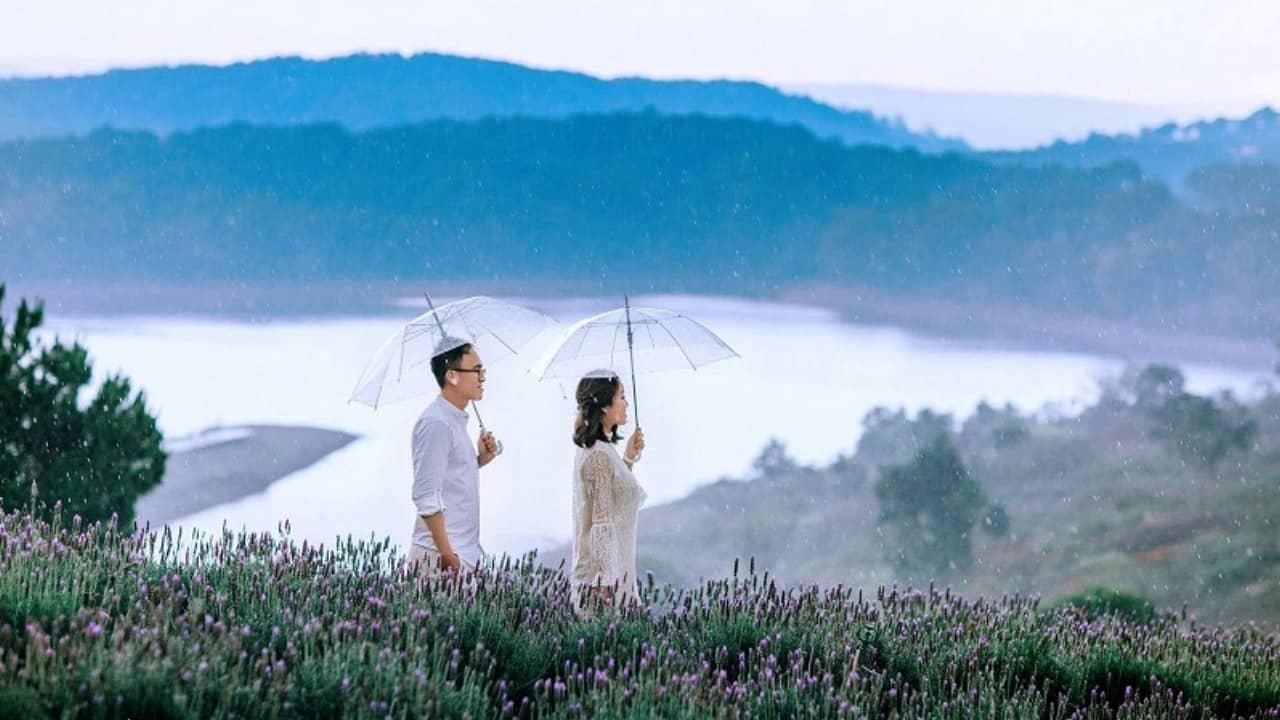 Chụp ảnh cưới cùng hoa Lavender