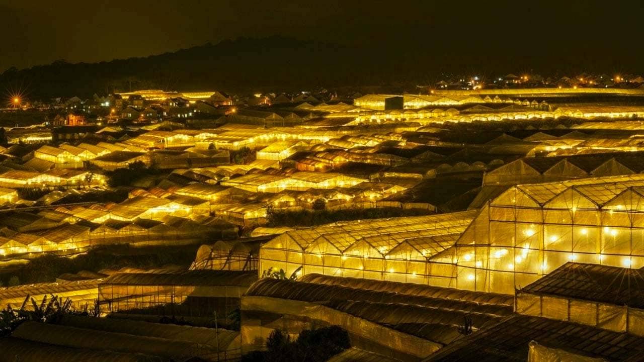 Đà Lạt về đêm rực sáng cả một vùng thung lũng với hàng trăm căn nhà lồng trồng hoa. Nguồn: Internet