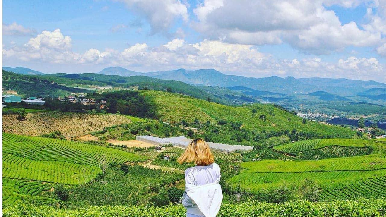 Ngăm quang cảnh tuyệt đẹp tại đồi chè Cầu Đất
