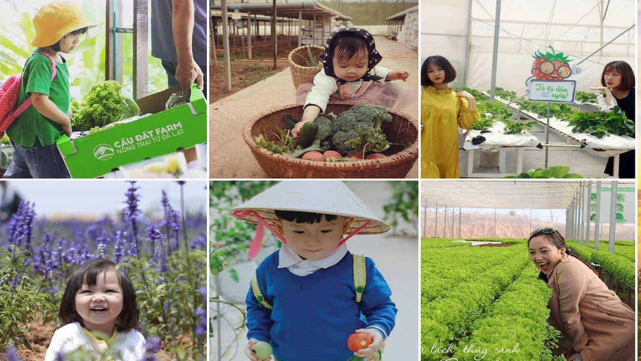 Các bé có thể thu hoạch trái cây tại Cầu Đất Farm