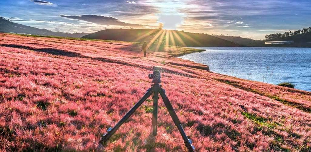 """""""thiên đường cỏ hoa"""" lãng mạn trên đồi cỏ hồng tự nhiên"""