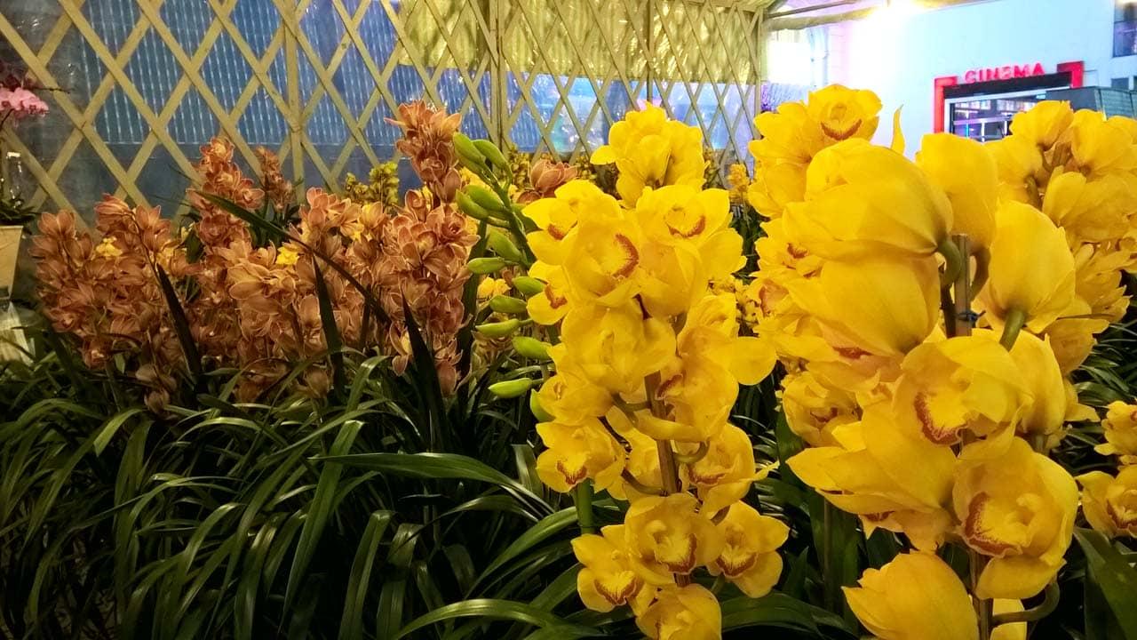 Địa lan là loài hoa Đà Lạt đắt đỏ nhưng quý giá và được nhiều du khách yêu thích. Nguồn: Internet