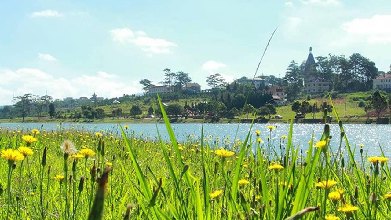Những đồi hoa bồ công anh bên bờ hồ Tuyền Lâm