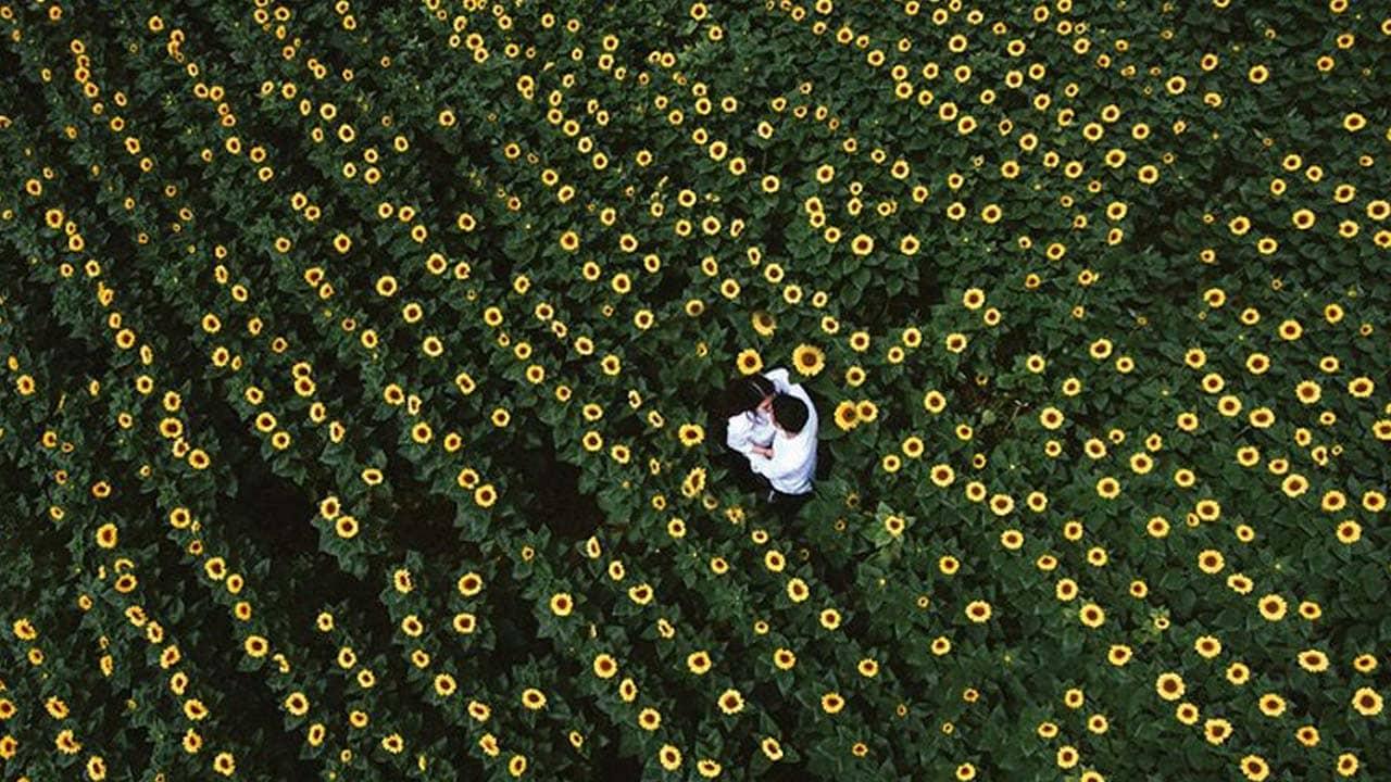 Cánh đồng hoa hướng dương đối diện Cafe Mê Linh