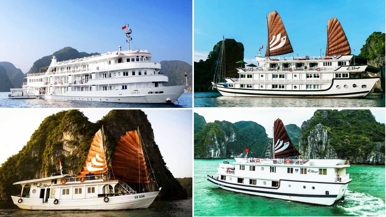 Bốn dòng du thuyền Bhaya Hạ Long với những mức giá khác nhau. Nguồn: Internet