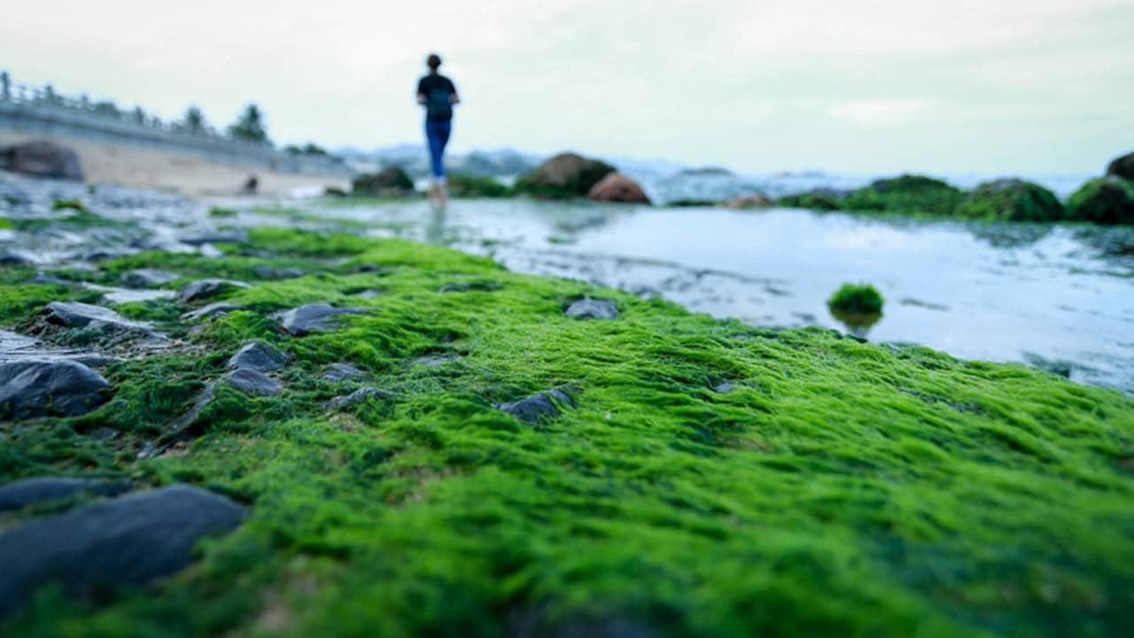 Rêu xanh bám chặt vào đá