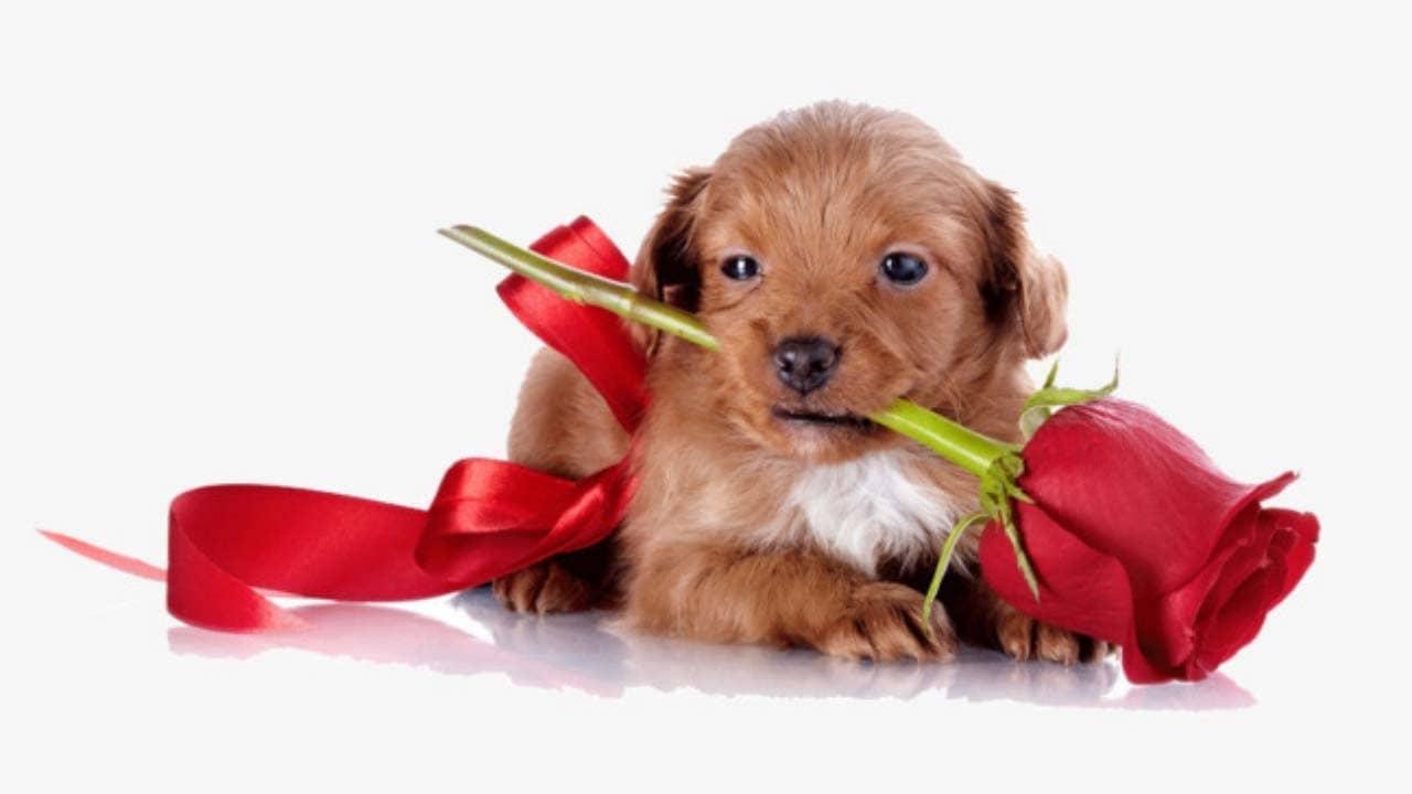 Tặng thú nuôi vào ngày 8/3 sẽ giúp bạn 'ghi điểm' trong mắt các cô nàng yêu động vật