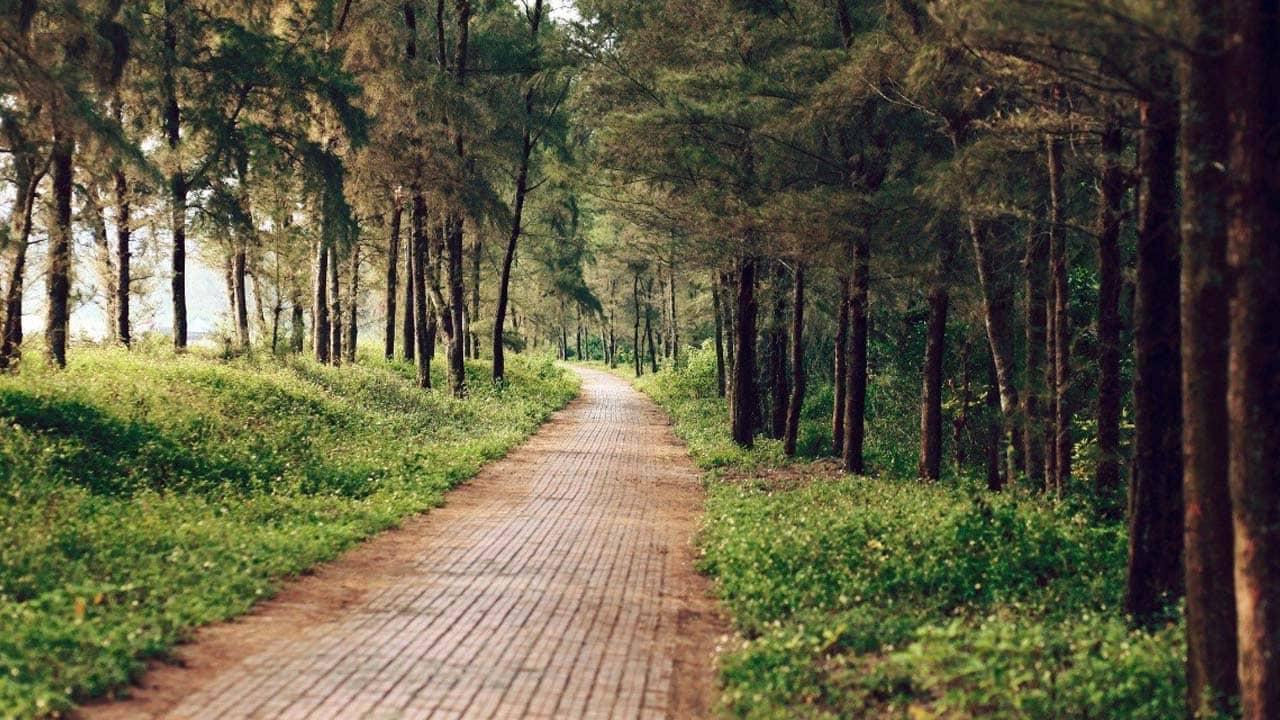 Con đường Tình Yêu - điểm đến dành cho các cặp đôi du lịch Cô Tô. Nguồn: Internet