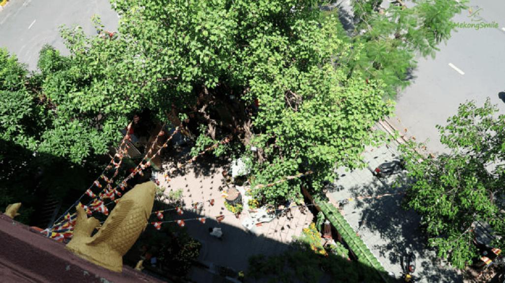 Bóng cây mát mẻ