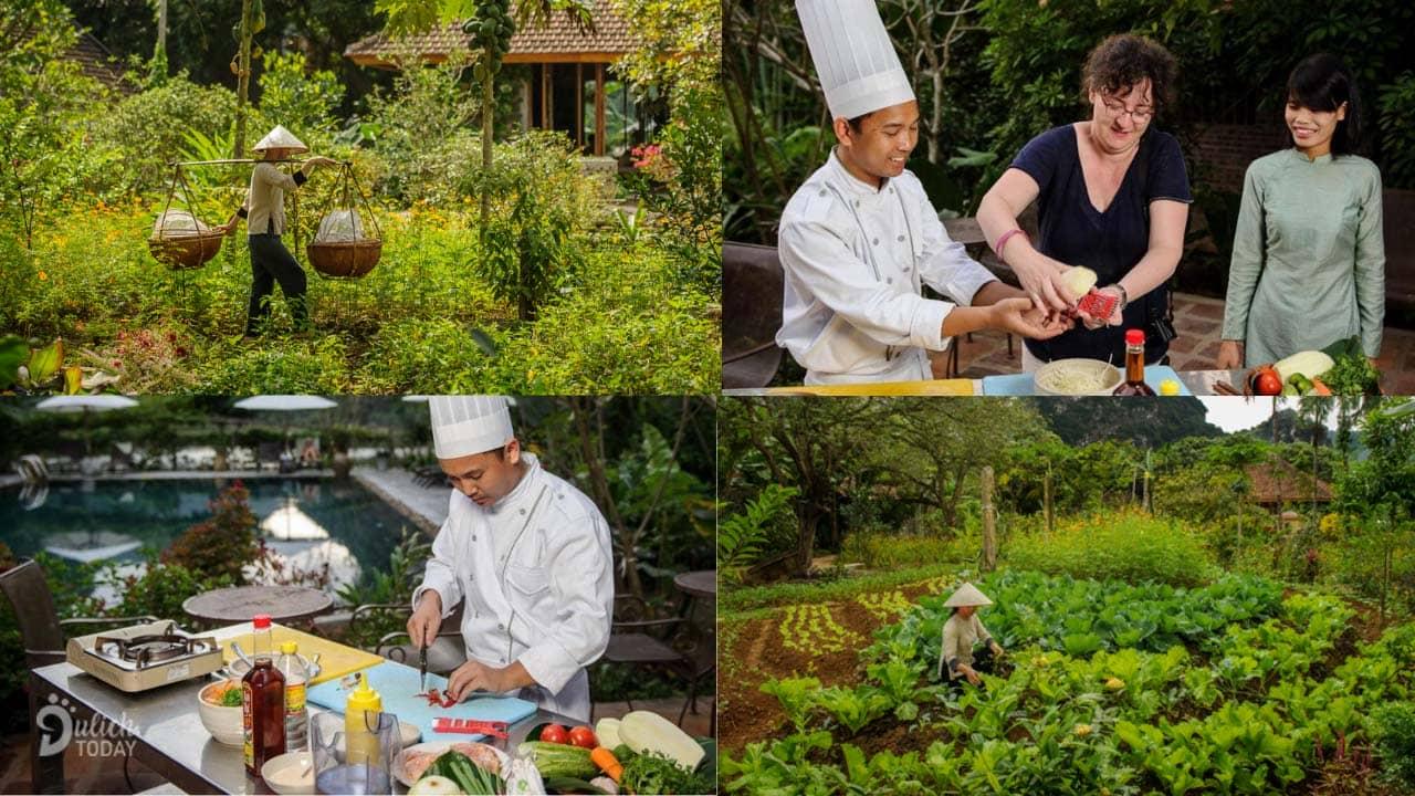 Du khách thu hoạch rau tại vườn và tham gia lớp học nấu ăn tại resort