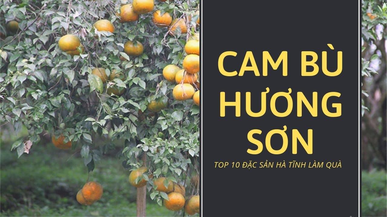Cam bù Hương Sơn mọng nước, ngọt vị