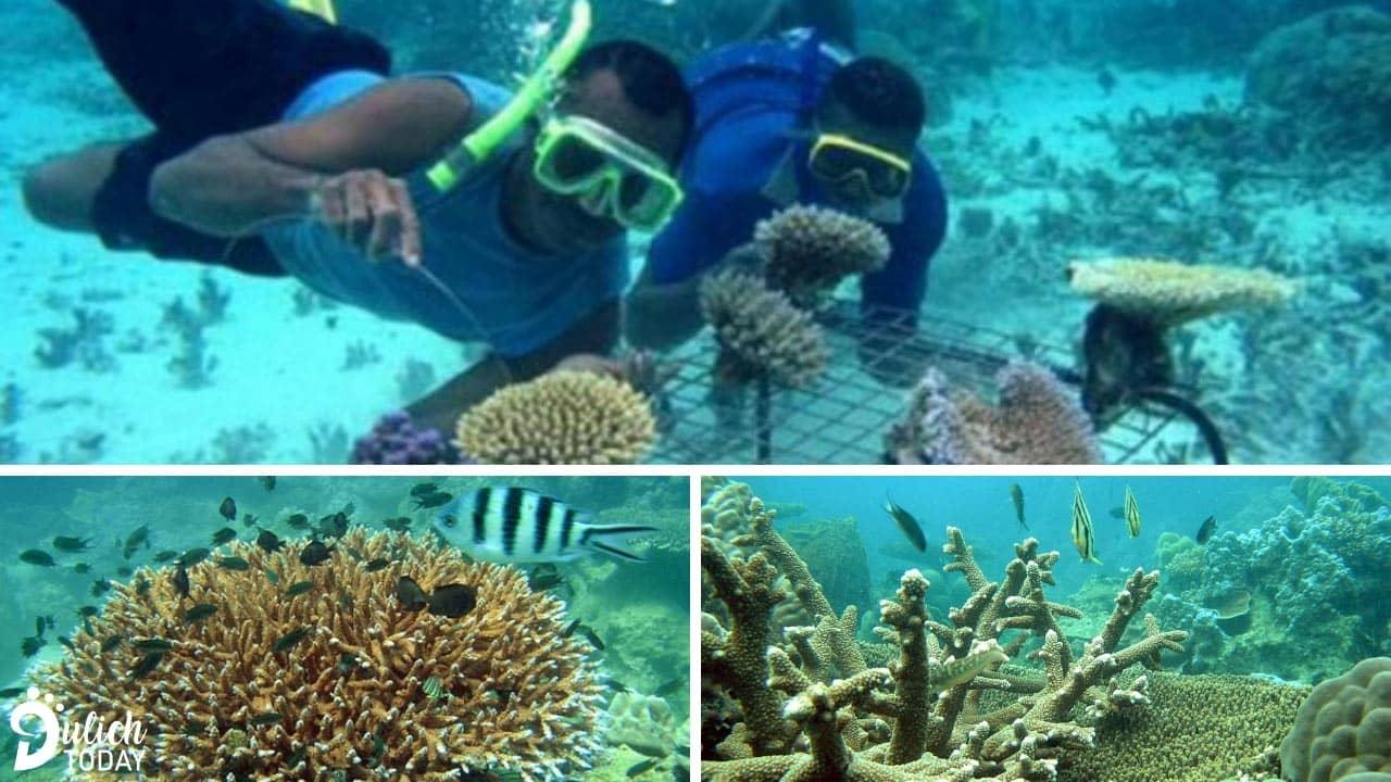 Ngắm san hô ở phía Bắc đảo Phú Quốc