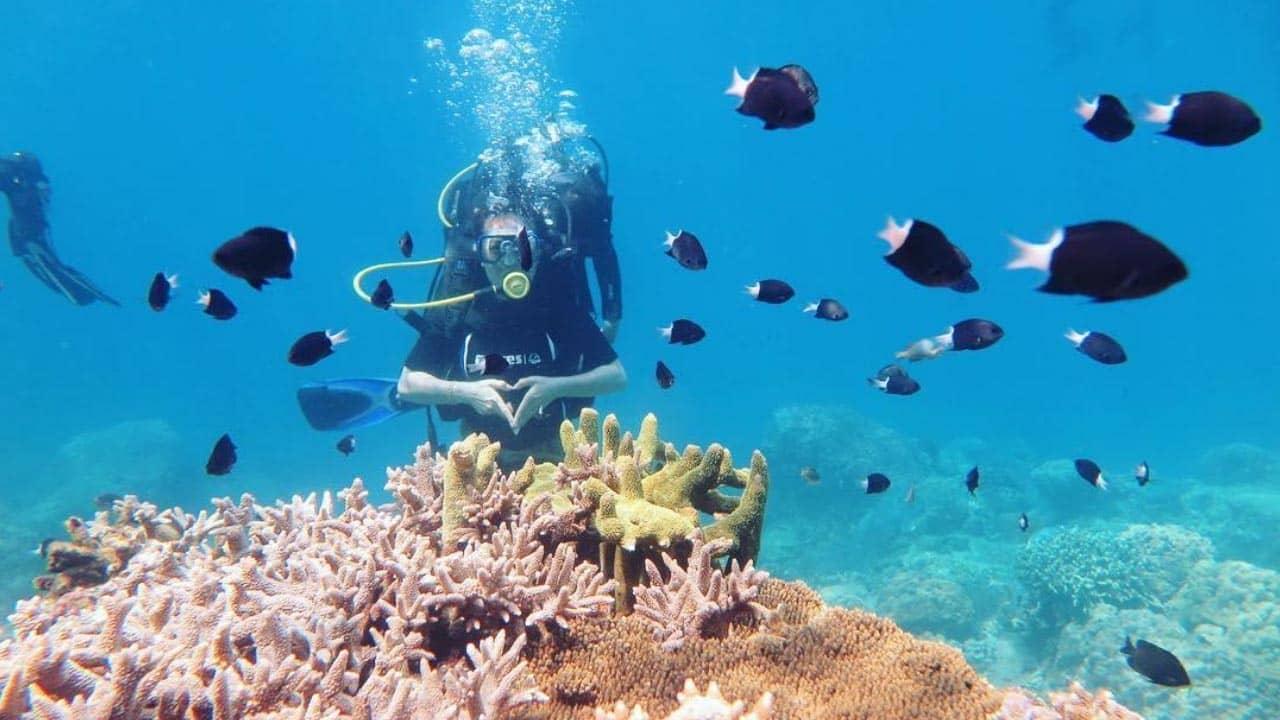 Lặn biển ngắm san hô ở quần đảo An Thới