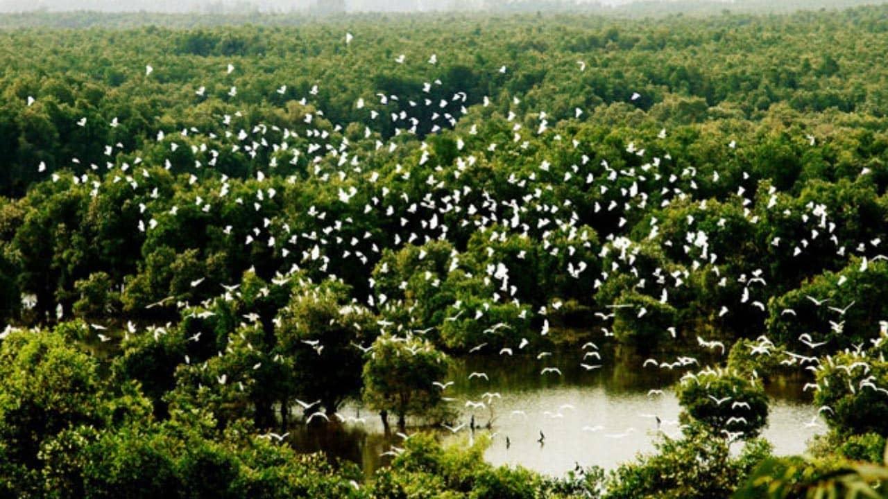 Cứ đến mùa Vườn Cò Bằng Lăng lại thu hút hơn 300.000 cá thể cò đến đây tạo nên bức tranh vô cùng ấn tượng
