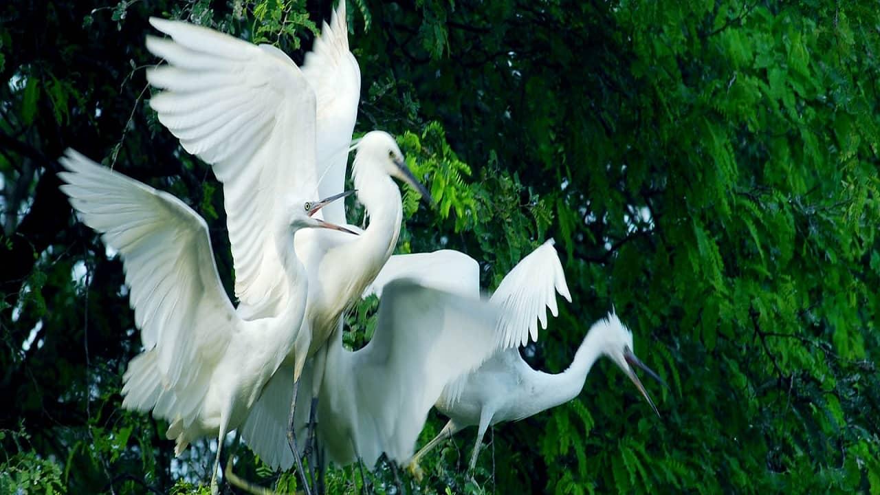 Vườn Cò Bằng Lăng - điểm du lịch sinh thái lớn nhất Cần Thơ