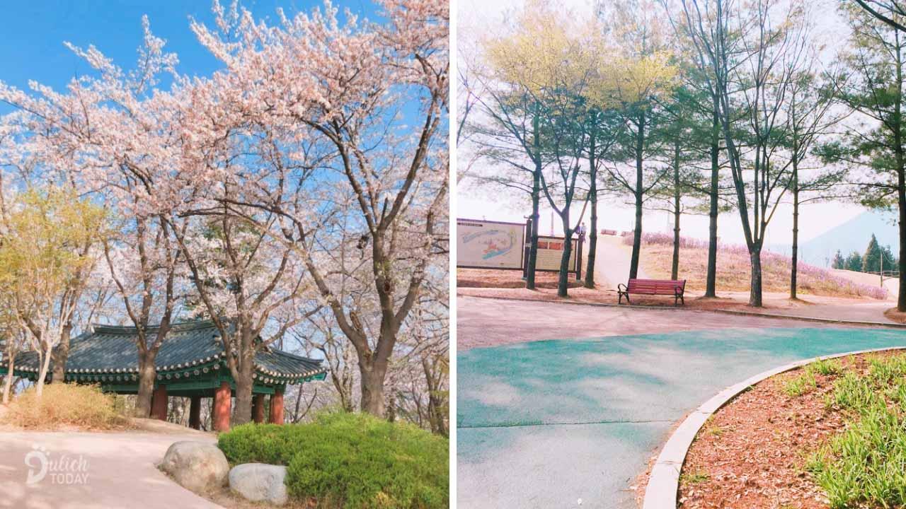 Công viên Namsan - thiên đường hoa anh đào
