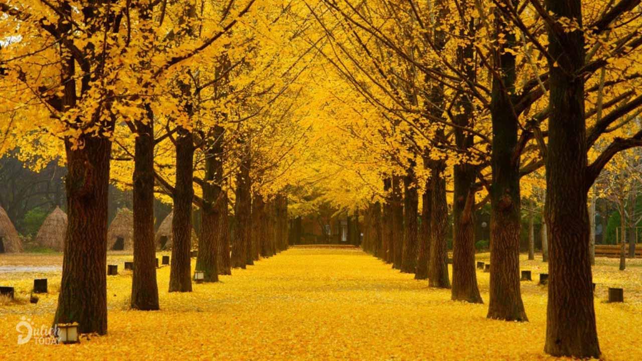 Đảo Nami - một trong những địa điểm du lịch mùa thu tuyệt đẹp nhất tại Hàn Quốc