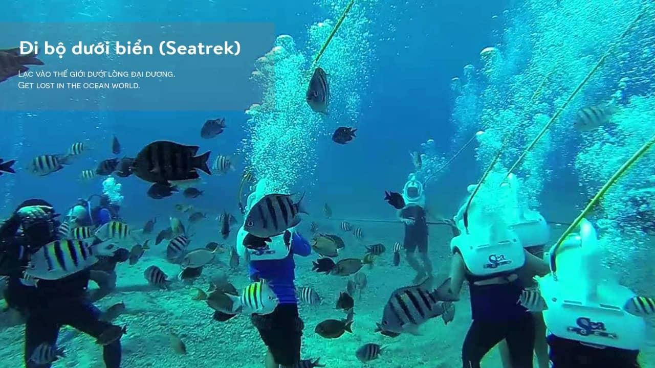 Tour đi bộ dưới biển Cù Lao Chàm
