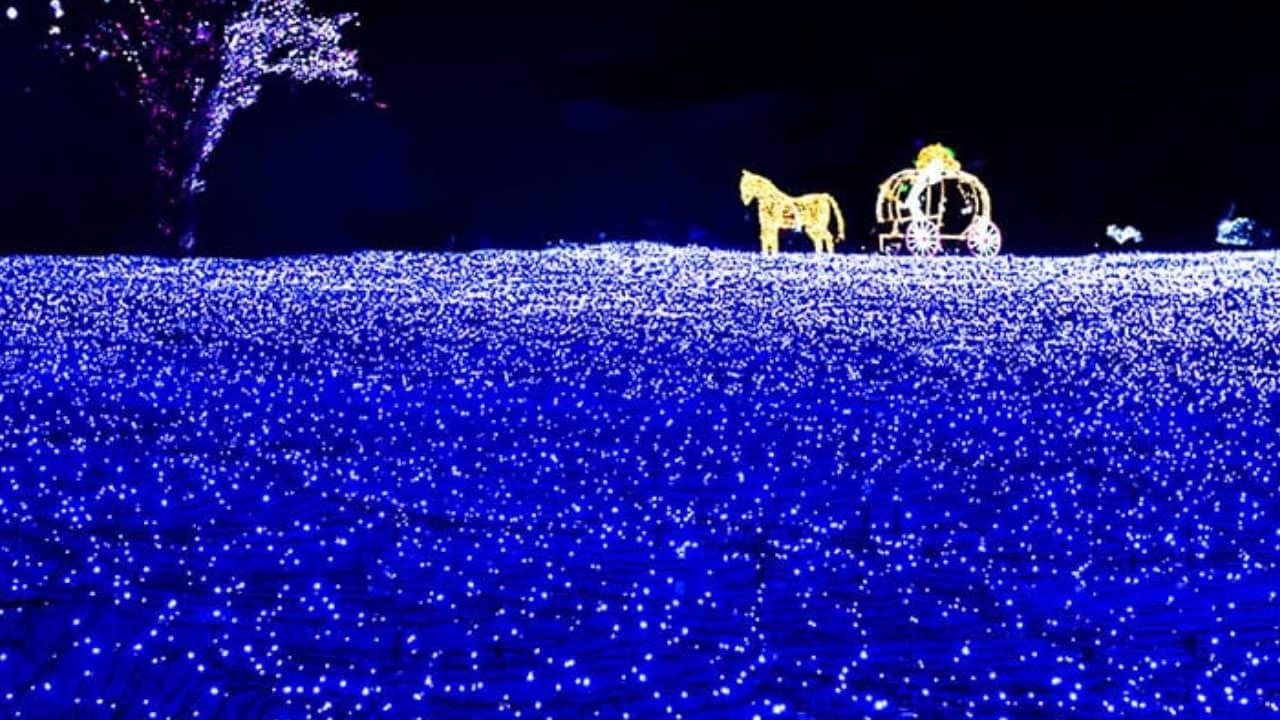 Ánh đèn led lung linh bao phủ hơn 30.000 m2 của lệ hội sẽ khiến nơi đây càng lãng mạn