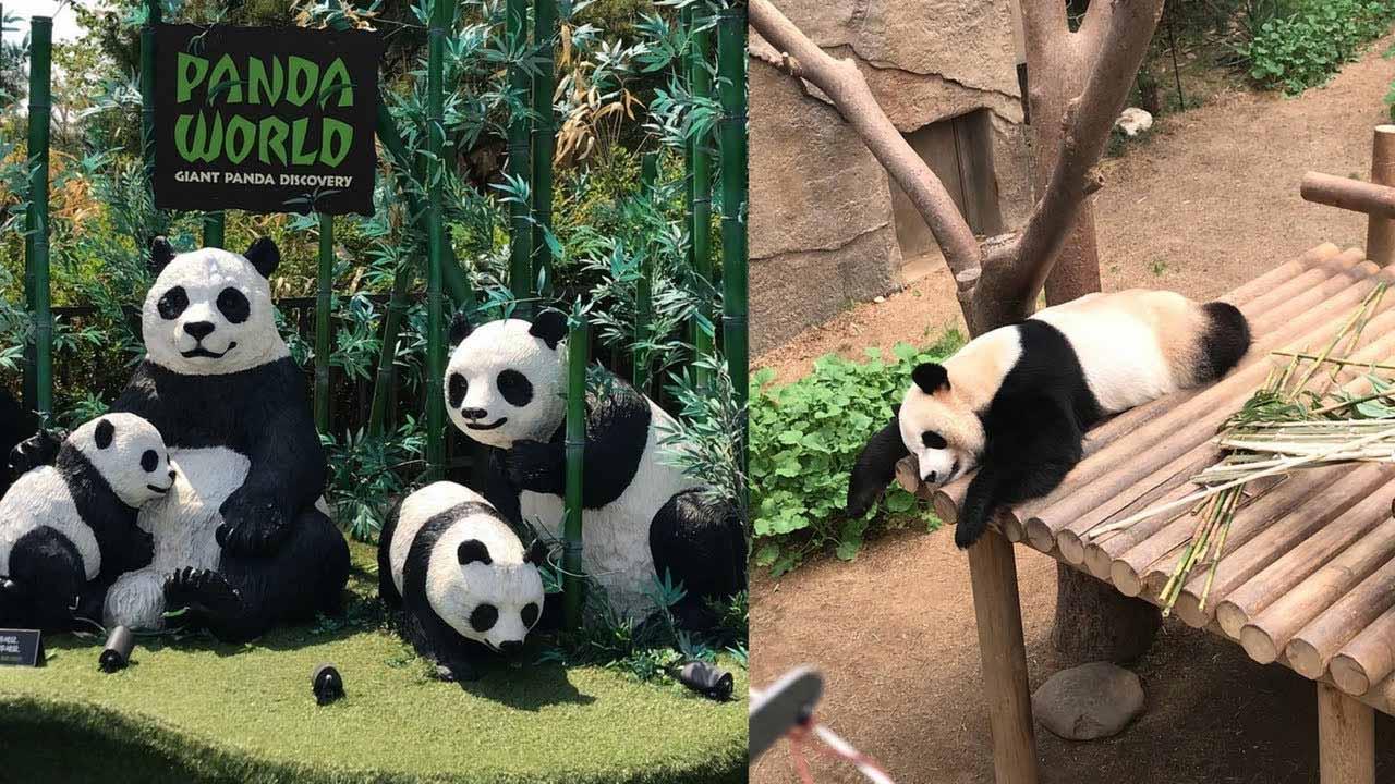 Zoo Topia - vườn bách thú nổi tiếng số 1 Hàn Quốc