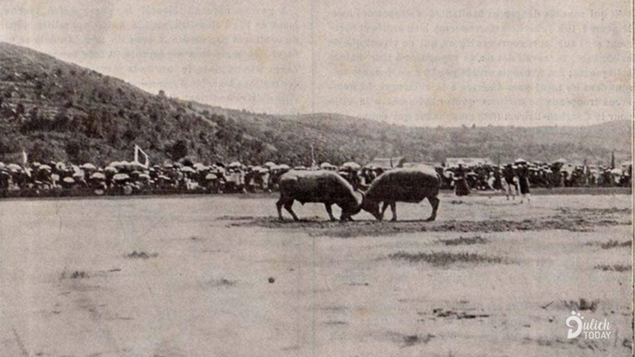 Lễ hội chọi trâu Đồ Sơn có truyền thống xa xưa, từ những năm Hải Phòng còn là thuộc địa Pháp