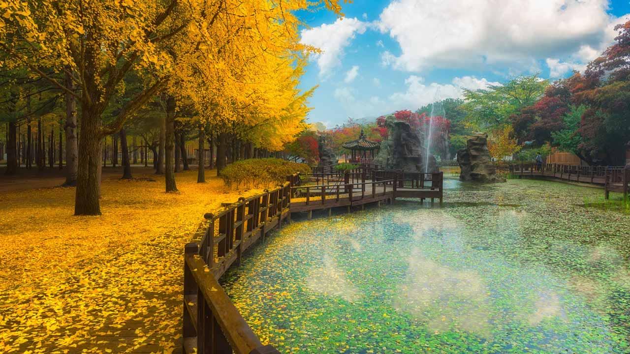Khi đến Hàn Quốc tháng 11 du khách sẽ thấy đảo Nami đầy thơ mộng