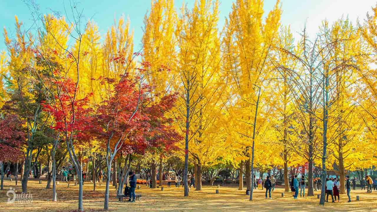Du lịch Hàn Quốc mùa nào đẹp - mùa thu đầy thơ mộng, hữu tình