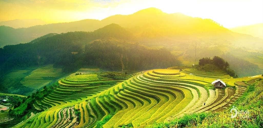 """Hà Giang tháng 10: kinh nghiệm ngắm mùa """"hoa tam giác mạch"""" đẹp nhất!"""