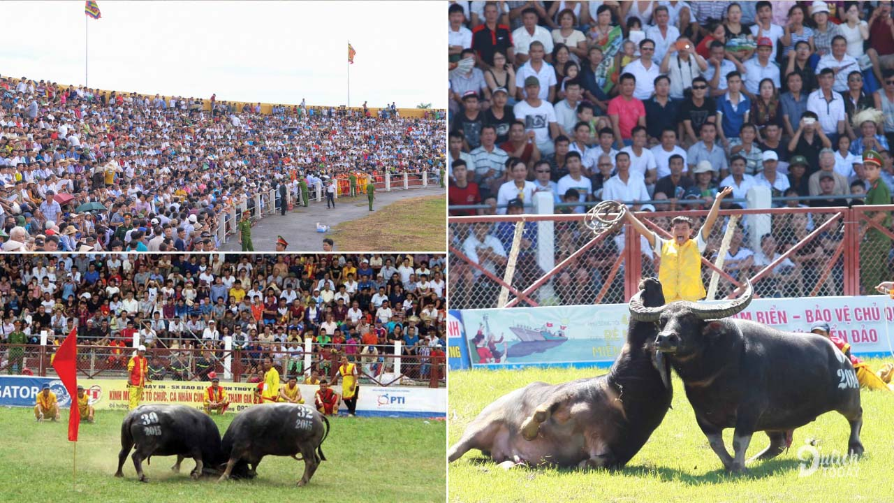 Rất đông du khách tới xem lễ hội chọi trâu Đồ Sơn Hải Phỏng