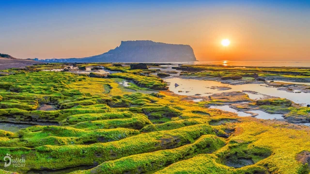 Du lịch Hàn Quốc mùa nào đẹp - mùa hè với cảnh sắc tràn ngập màu nắng