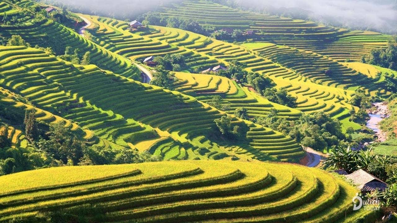 Cảnh đẹp tháng 10 Hà Giang nổi bật nhất là những ruộng bậc thang vàng ruộm mùa lúa chín