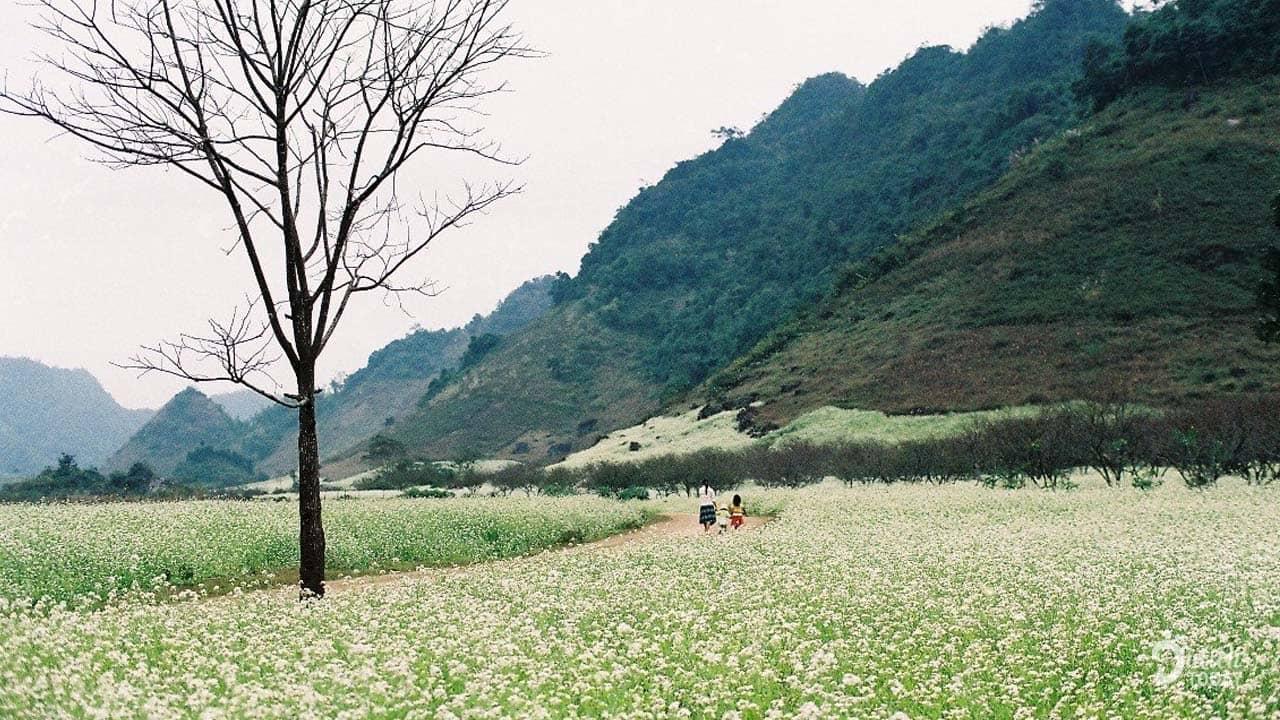 Đi du lịch Hà Giang tháng 11 là lúc trời bắt đầu trở lạnh, vừa bước vào đông