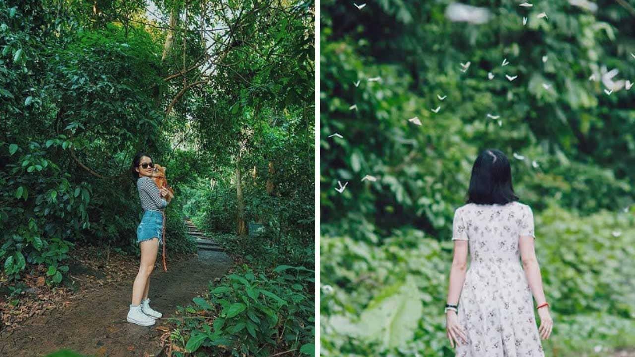 Vườn Quốc Gia Cúc Phương là một trong những địa điểm du lịch sinh thái nổi tiếng bậc nhất Ninh Bình.